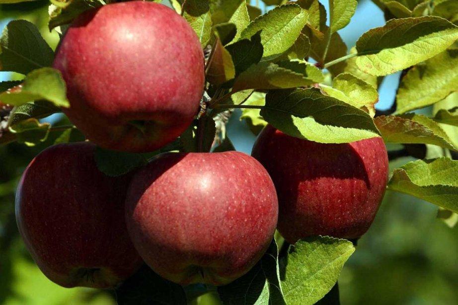 Les pommes d'origine japonaise y sont le plus... (Photo AFP)