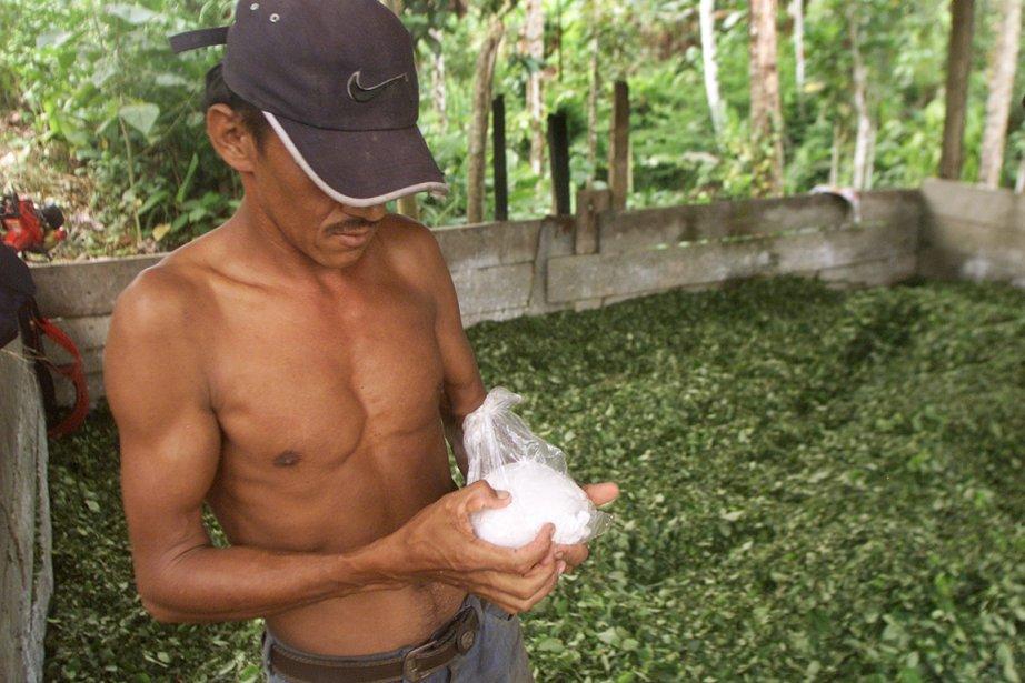 La Colombie est le premier producteur mondial de... (Photo: Daniel Munoz, Archives Reuters)