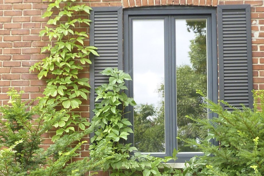 plantes grimpantes un entretien facile jardiner. Black Bedroom Furniture Sets. Home Design Ideas