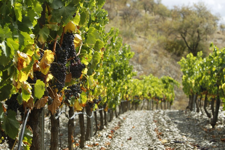 Vignobles dans la région du Priorat en Espagne... (Photo: Martin Chamberland, La Presse)