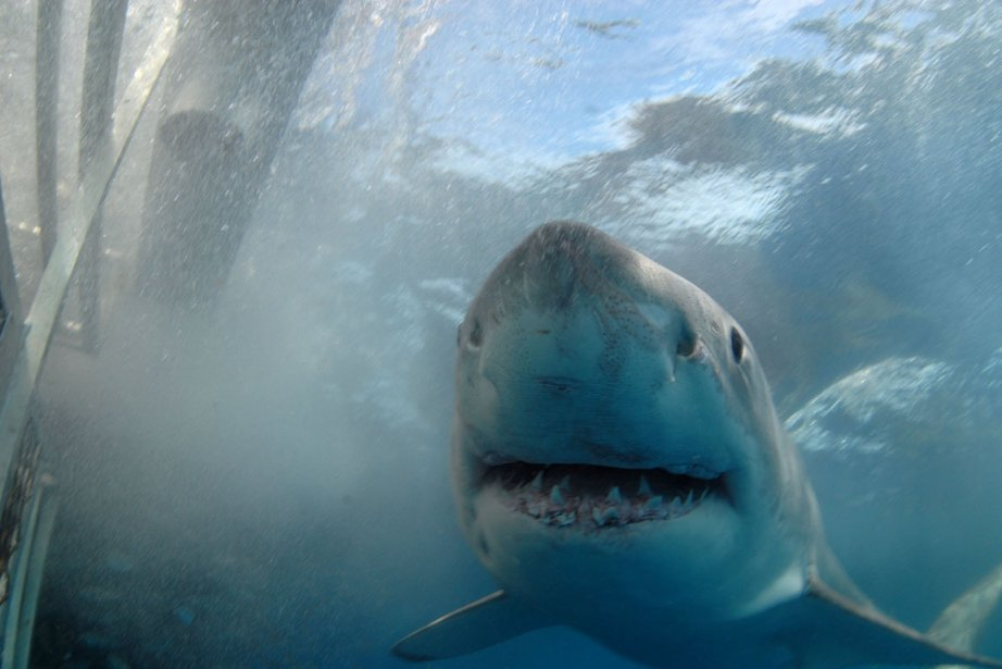 Un biologiste de la vie aquatique du gouvernement... (Photo: Bloomberg News)