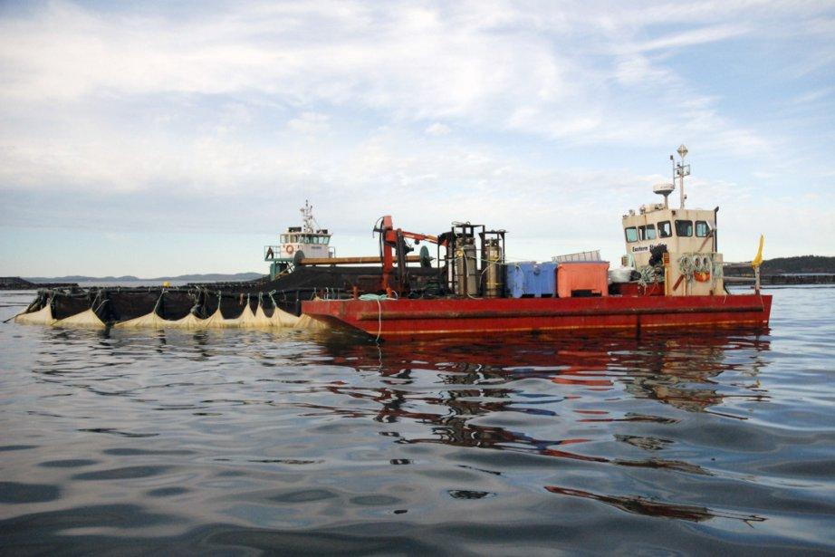 Selon ce qu'affirme Environnement Canada, Cooke Aquaculture aurait... (Photo: John Papadopoulos, collaboration spéciale)