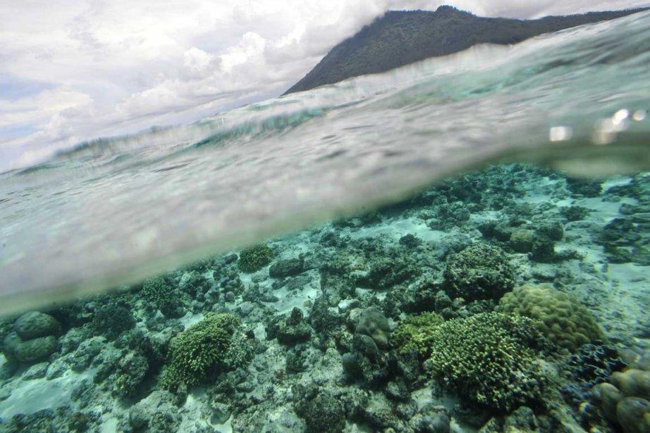 Deux «îles» immergées ont été repérées au fond... (Photo AFP)