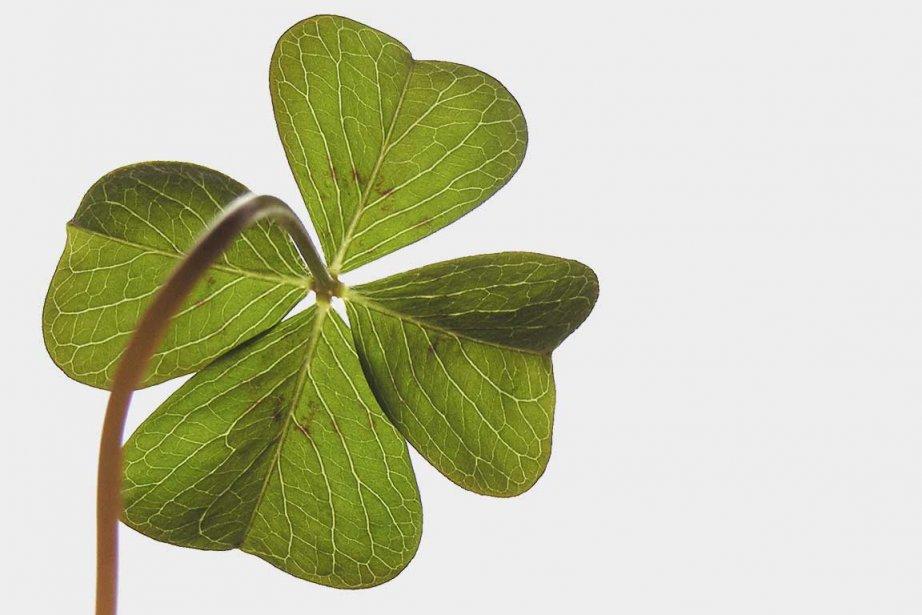 Le célèbre symbole de l'Irlande.... (Photo archives La Presse)