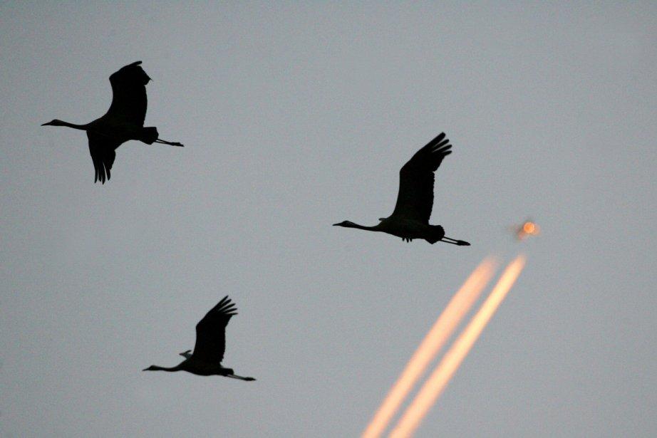 Les oiseaux et les papillons européens... (Photo: Archives Agence France-Presse)