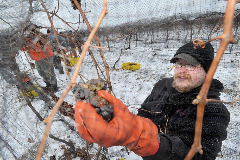 Ils sont près d'une douzaine de vignerons au Luxembourg à élaborer... (Photo: AP)