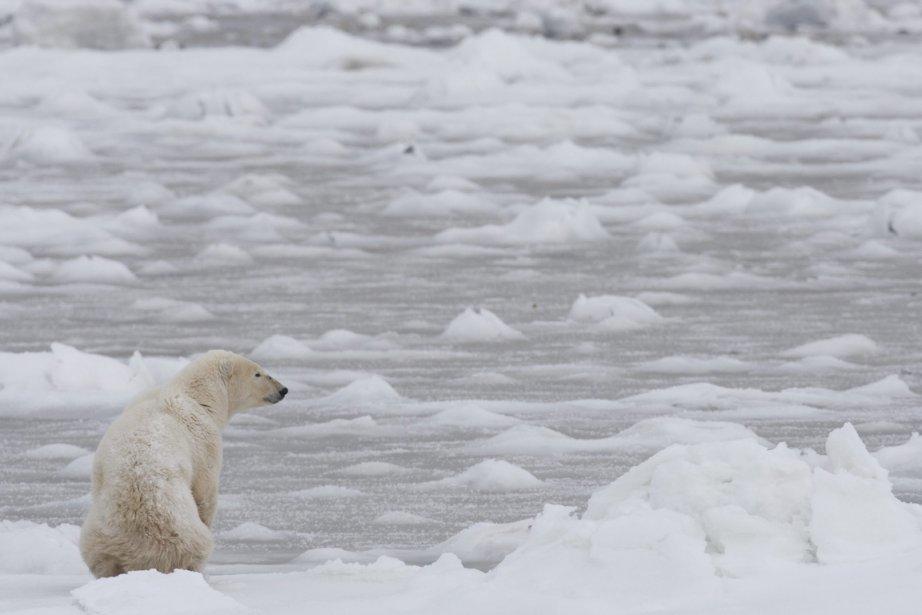 Les ours n'ont pas été en mesure de... (Photo: Jonathan Hayward, PC)