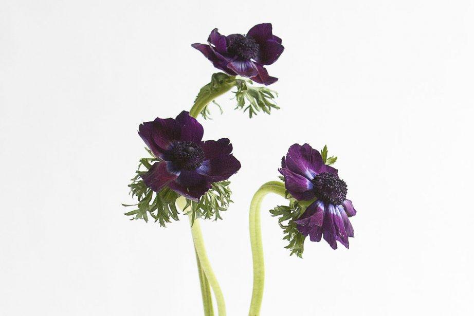 Le 13e Symposium des artistes sur la Route des fleurs aura lieu les 5 et  6 mai...