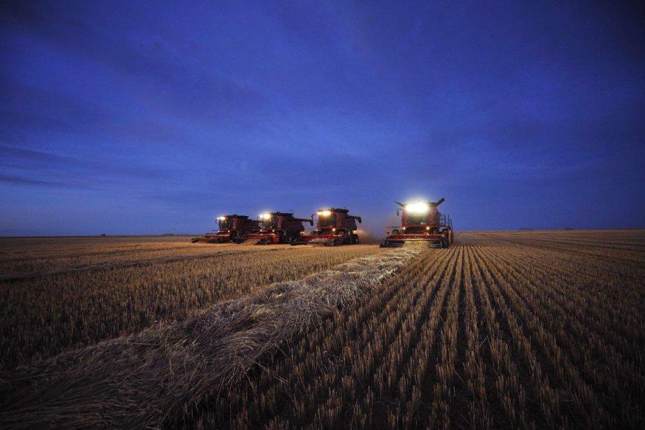 Les cours du maïs, du blé et du soja se sont repliés cette... (Photo Reuters)