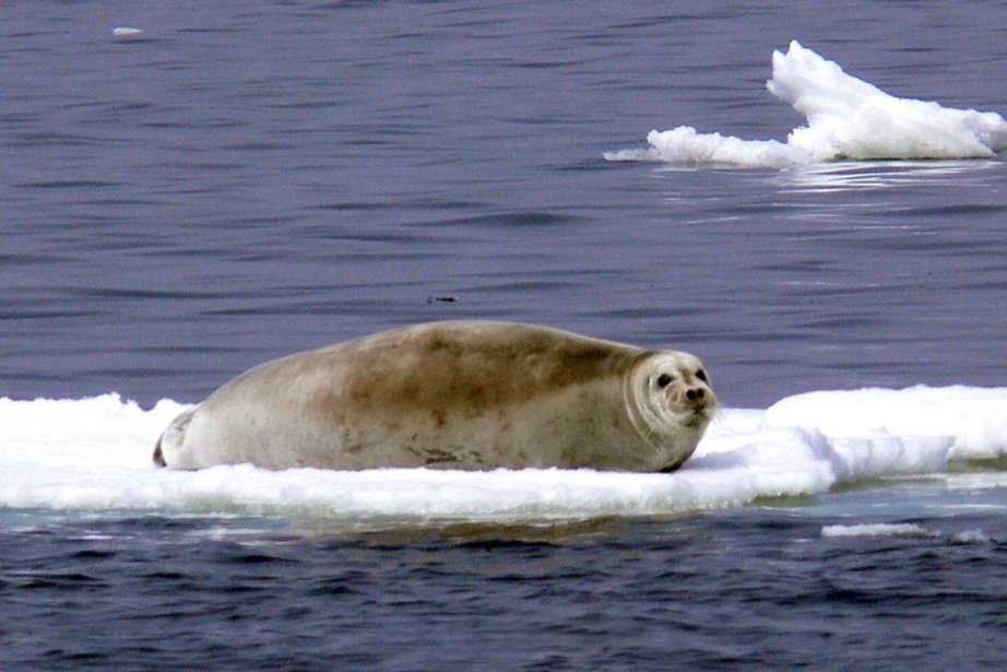 Partout dans le monde, phoques, otaries et d'autres... (Photo: Reuters)