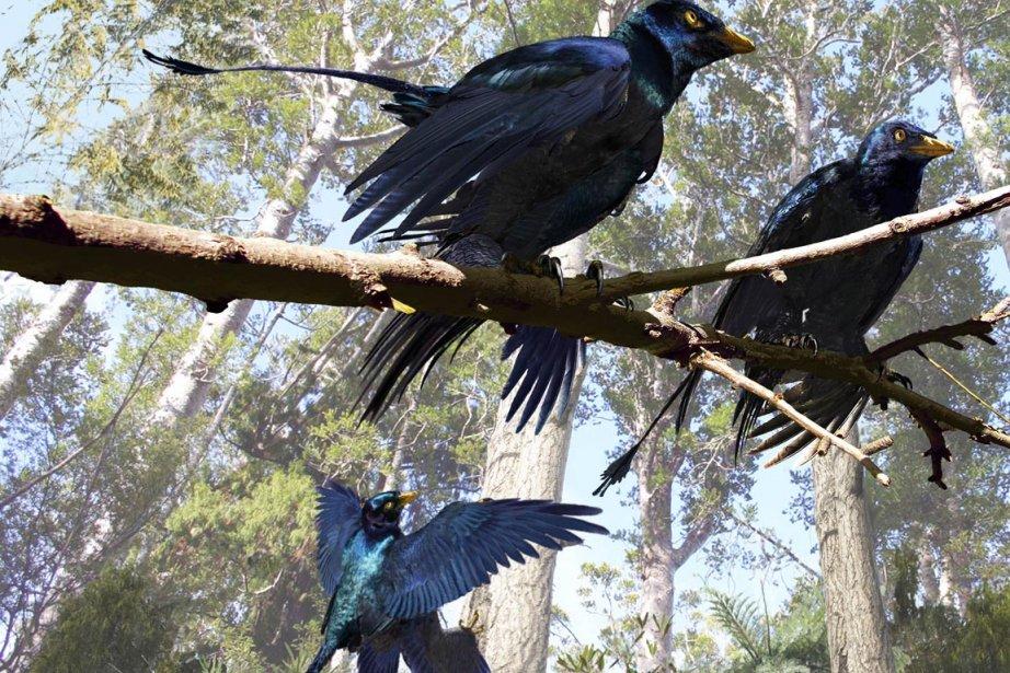 Les plumes du microraptor à quatre ailes, gros... (Photo: AFP/JASON BROUGHAM/UNIVERSITY OF TEXAS/)