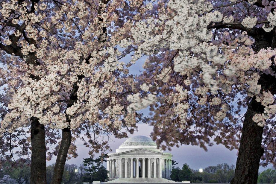 Le Japon offrait il y a un siècle des milliers de cerisiers aux États-Unis pour...