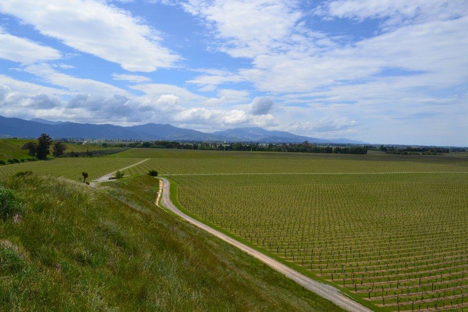 Vu du ciel et des montagnes, les vignes dominent la région de Blenheim (Marlborough). | 26 mars 2012