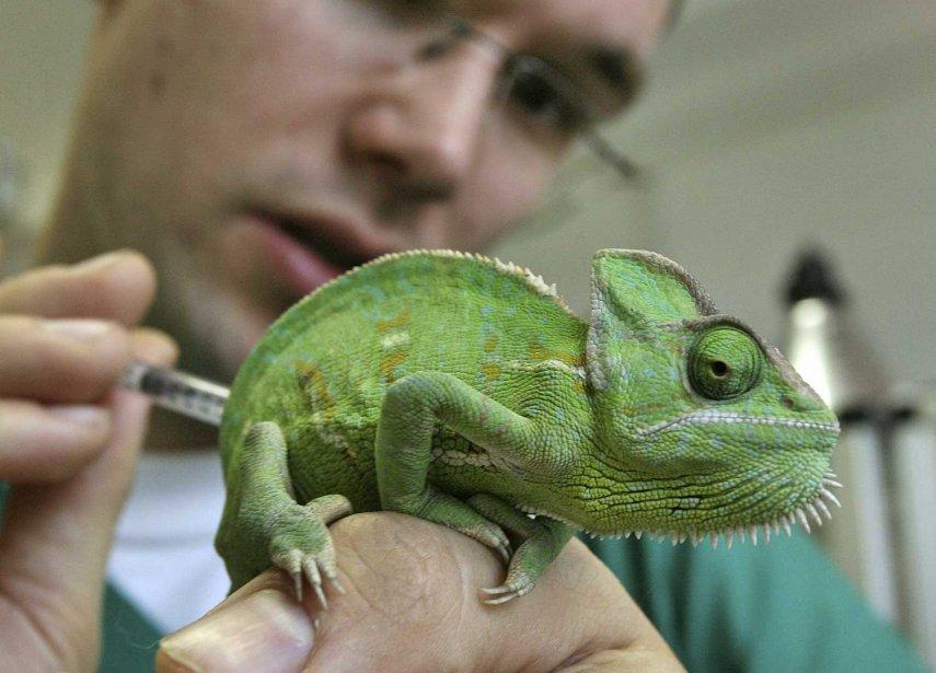 La faculté de médecine vétérinaire de l'Université de... (Photo Associated Press)