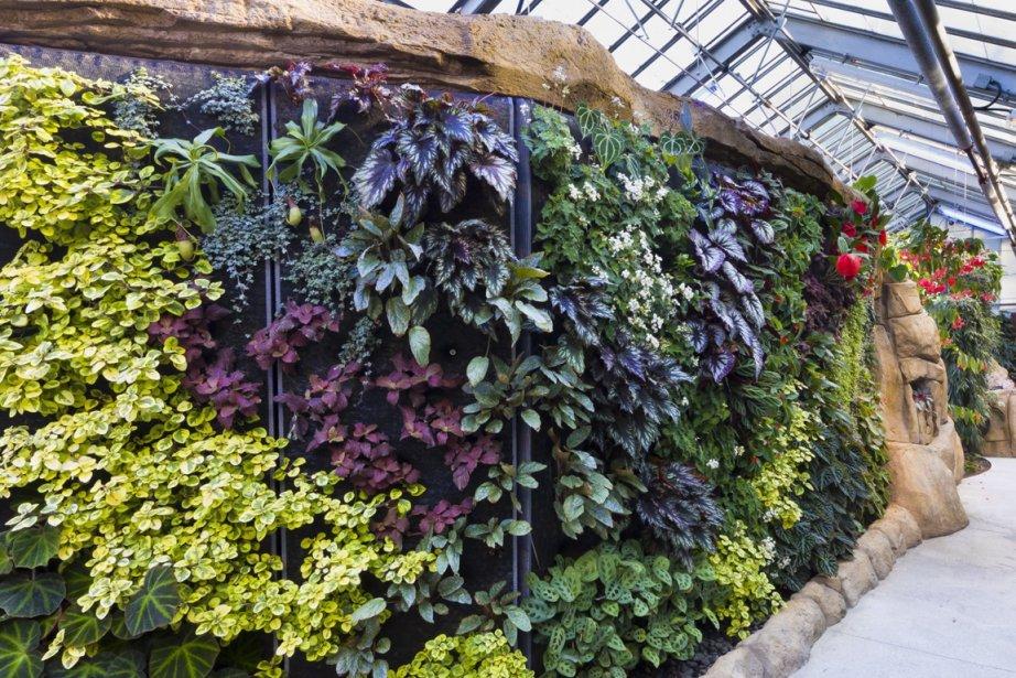 Mur végétal dans la nouvelle serre des bégoniacées... (Photo fournie par le Jardin botanique de Montréal)
