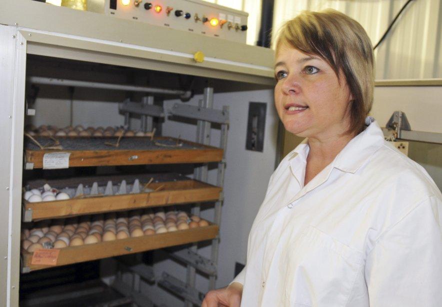 Les oeufs passent quelque 17 jours dans un incubateur à température contrôlée dans le couvoir. | 6 avril 2012