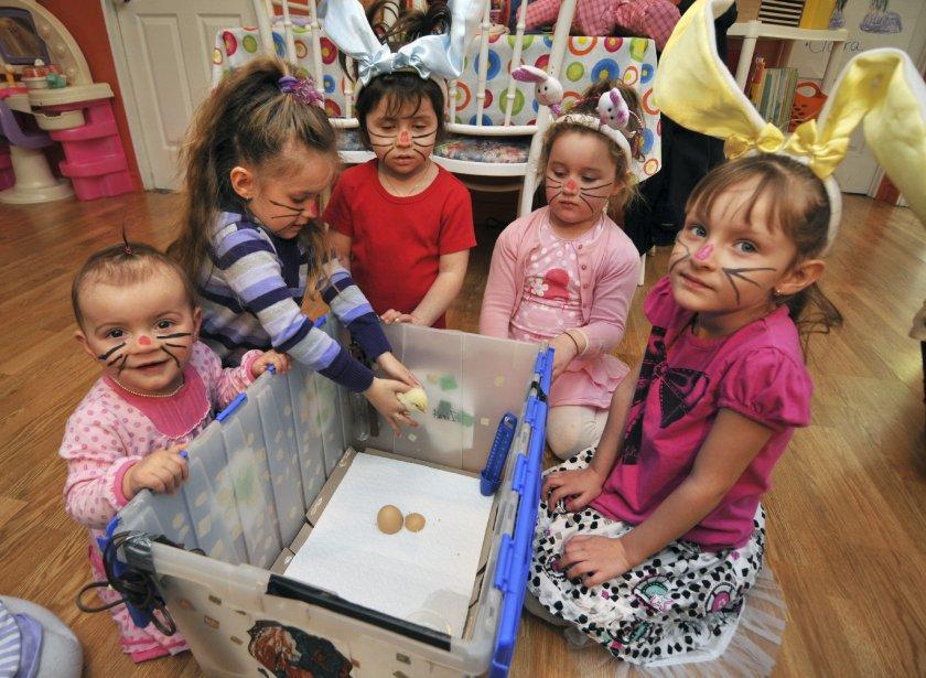 Les petites filles de la garderie familiale Les Rigoleaux préparaient avec fébrilité la couveuse qui abrite le poussin depuis une semaine. | 6 avril 2012