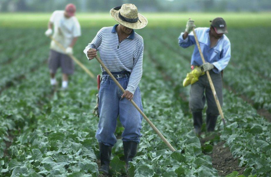 Chaque année, 73 000 travailleurs temporaires viennent au... (Photo archives La Presse)