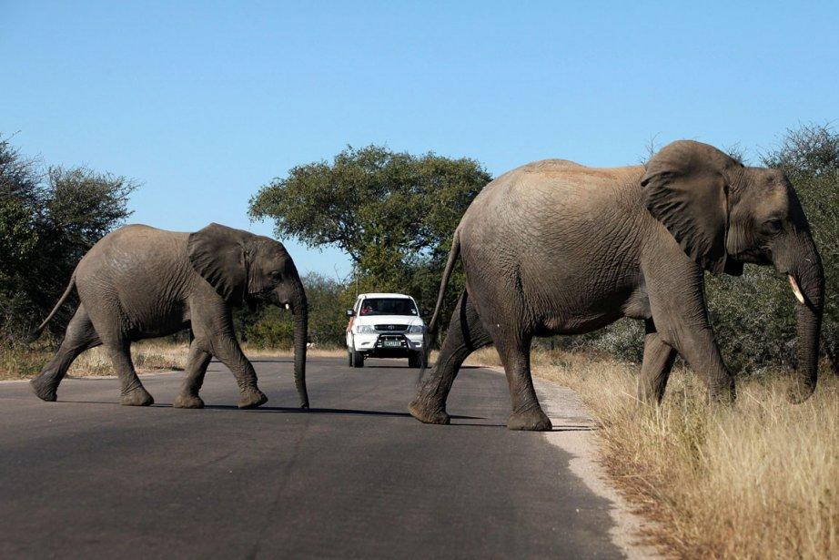 Des éléphants traversent la route au Parc national... (Photo Paballo Thekiso, AFP)