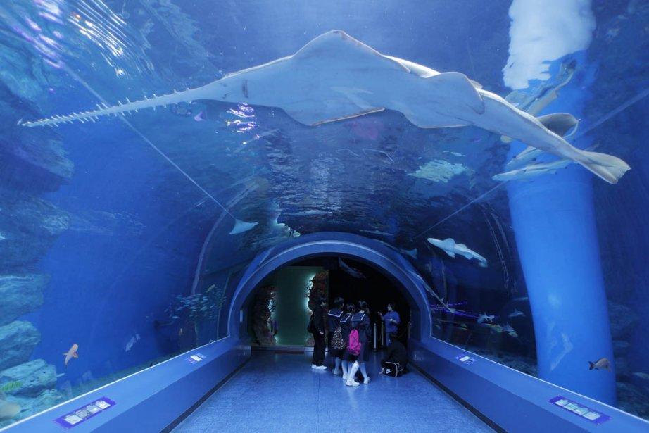 Photos de la semaine du 15 avril cyberpresse - Poisson shark aquarium ...