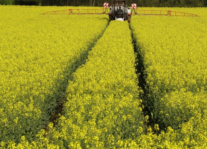 Un cultivateur fertilise un champ de colza à... (AP)