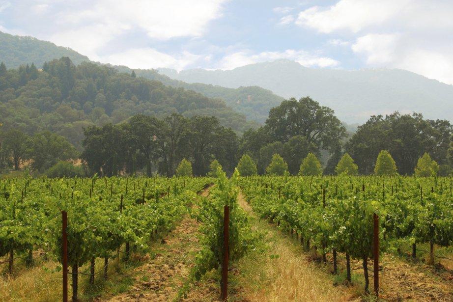 Un vignoble californien... (Photo Photos.com)