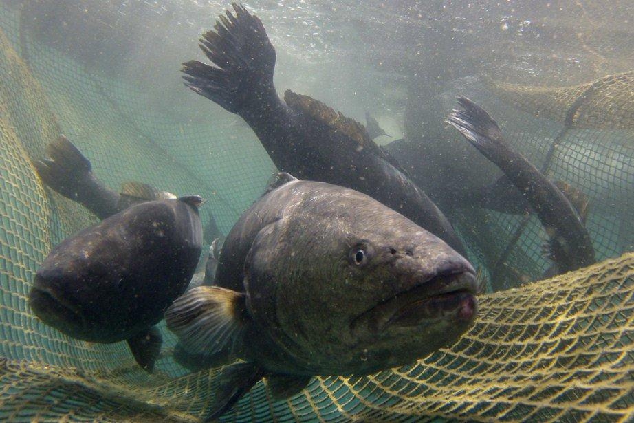 La pêche illicite ou non déclarée, qui représente... (Photo Reuters)