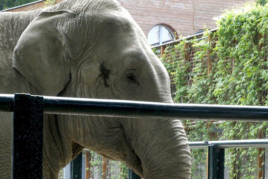 L'éléphante Citta a déjà prédit la victoire de... (Photo: AFP)