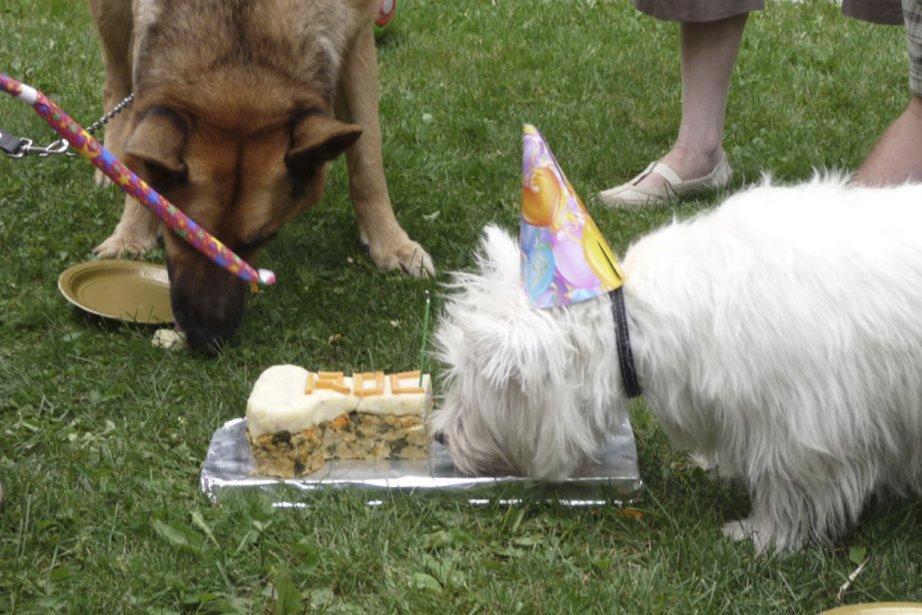 Fête de chiens.... (Photo fournie par Julie Duval-Courchesne)