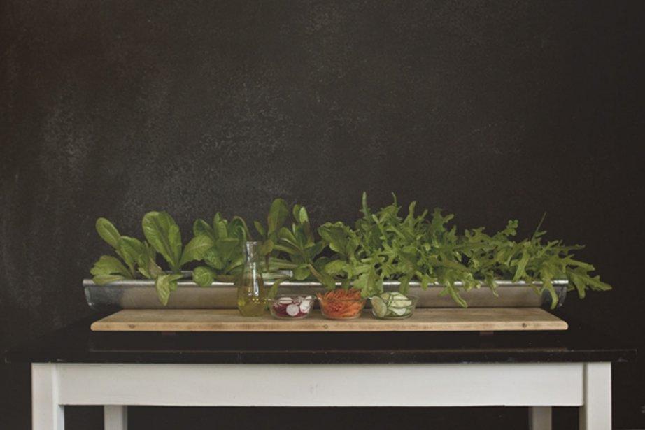 Un petit jardin la floridienne sophie ouimet lamothe design - Petit jardin vaudreuil ...