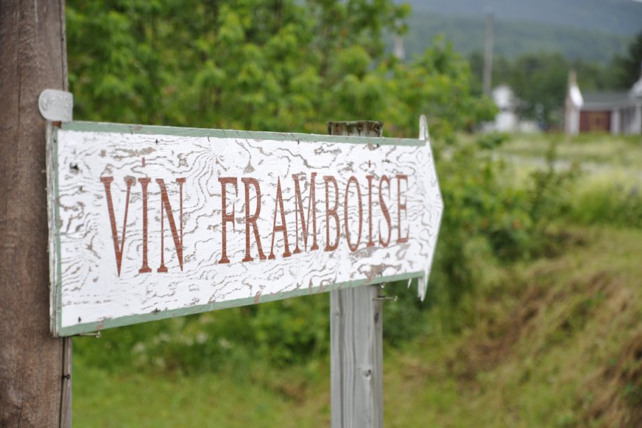 Vallée de la framboise, à Val-Brillant... (Photos Stéphanie Morin, La Presse)