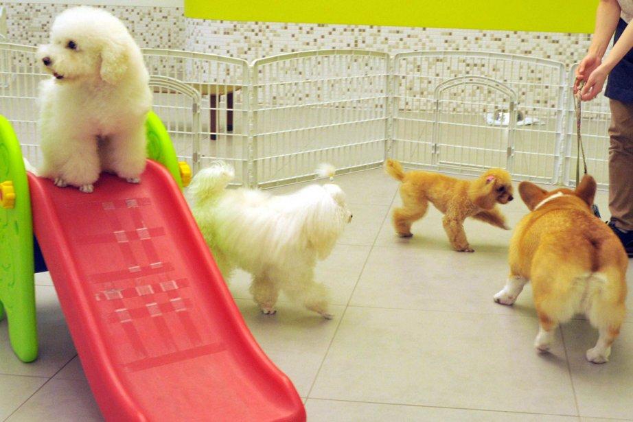 un h tel pour les bats amoureux des chiens insolite. Black Bedroom Furniture Sets. Home Design Ideas