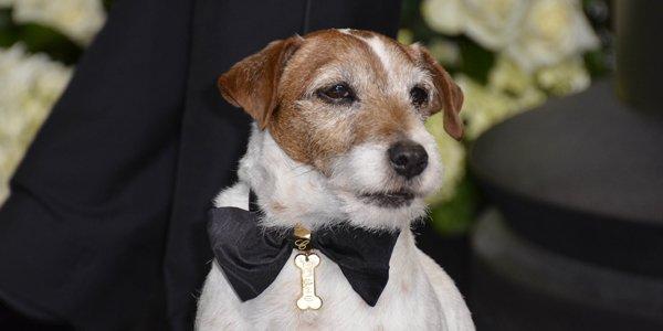 Après avoir récemment annoncé qu'il prenait sa retraite, le chien Uggie... (AFP)
