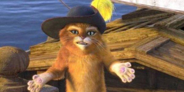Le Chat potté....