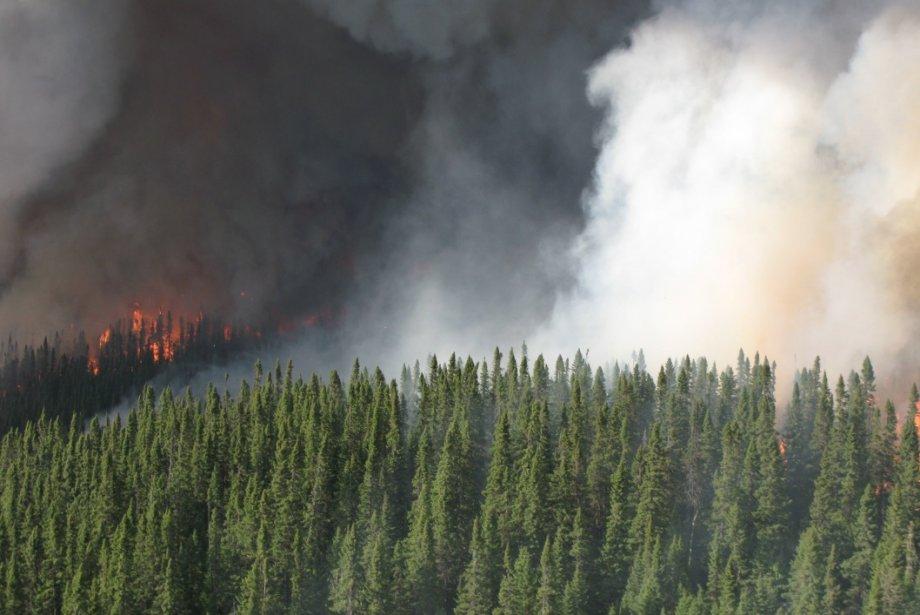 La Société de protection des forêts contre le... (Photothèque Le Quotidien)