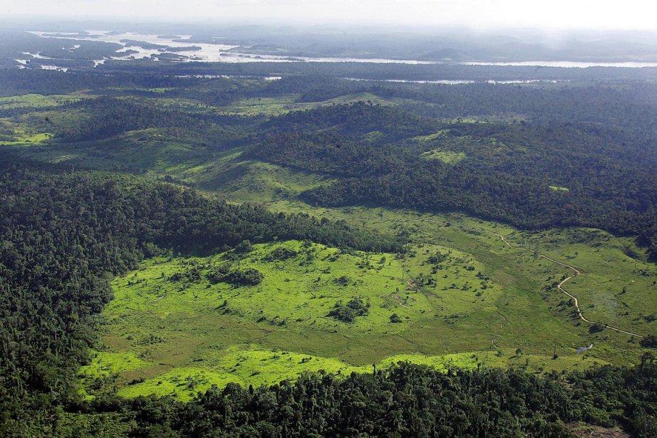 L'absorption de CO2 par les végétaux et les... (PHOTO ANTONIO SCORZA, ARCHIVES AFP)
