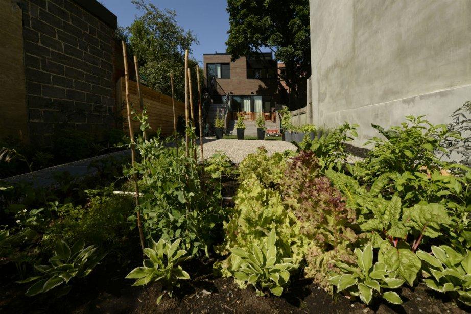 Au mois de mai, Pierre Gingras invitait les jardiniers débutants à se lancer...