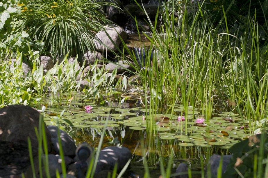 Dans cet étang aménagé en 2003, on retrouve... (Photo Ivanoh Demers, La Presse)