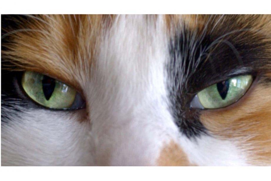 Un chat nommé Bandit est revenu chez lui jeudi après un... (PHOTO PHOTOS.COM)