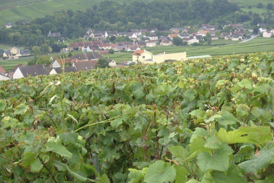La Champagne (photo) est l'une des régions françaises... (PHOTO ANDRÉE LEBEL, ARCHIVES LA PRESSE)