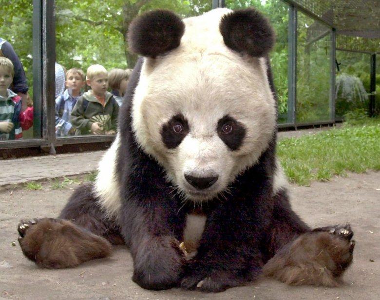 Bao Bao, décédé mercredi à l'âge de 34... (PHOTO AFP)