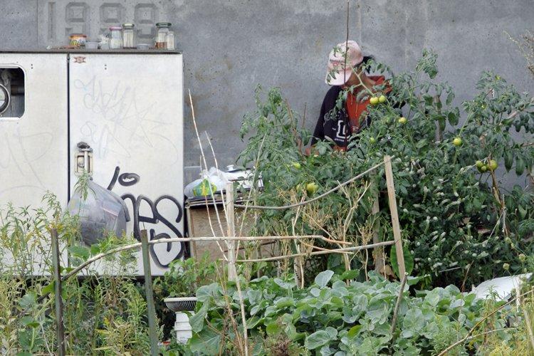 Un sans-abri possède un jardin au coin des... (Photo: Bernard Brault, La Presse)