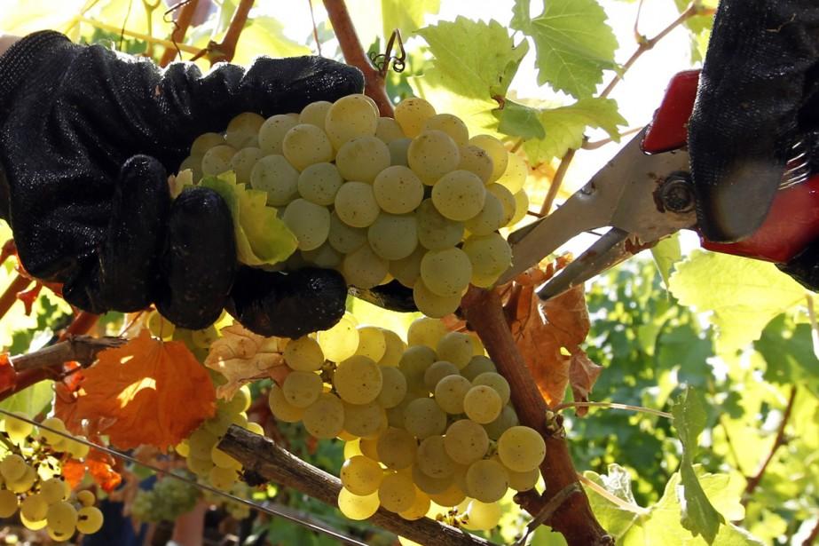 La production de vin dans le bordelais a... (PHOTO ARCHIVES REUTERS)