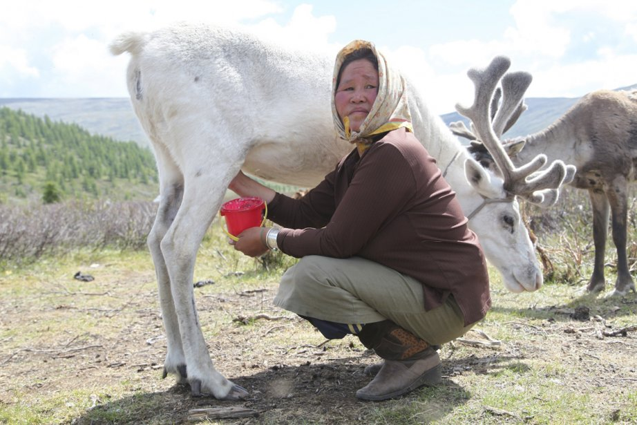 Les éleveurs de rennes vivent en clans dans... (Photo: Michèle Leclerc, collaboration spéciale)