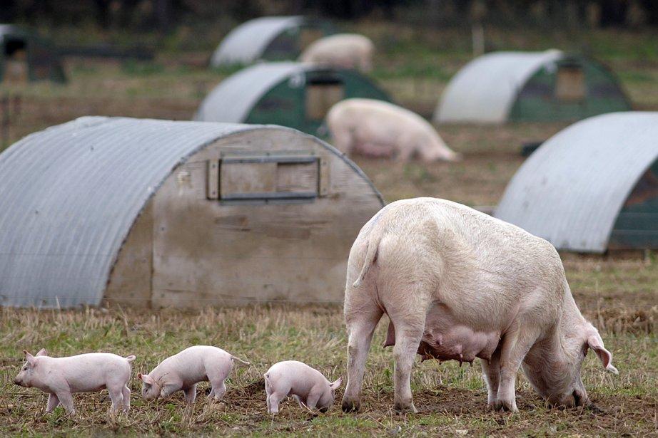 Selon une autre étude, le porc et le... (Photo: archives Bloomberg News)