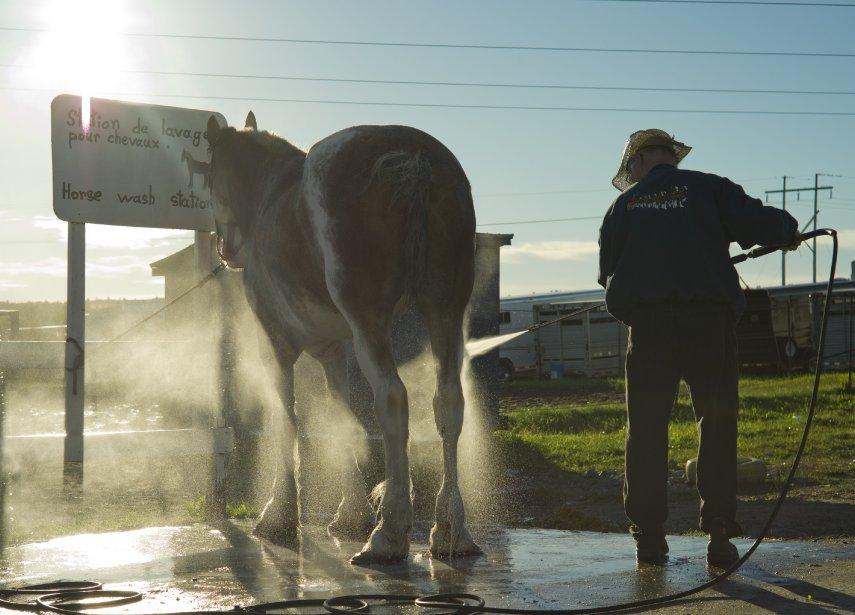 Un homme lave son cheval à l'écurie tôt le matin. | 11 septembre 2012