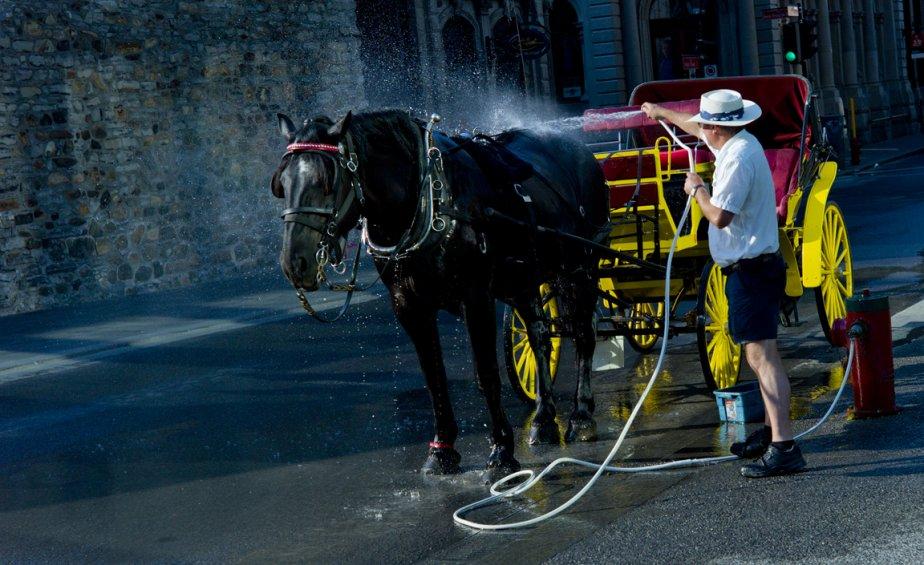 Un cocher et sa calèche devant la cathédrale Notre-Dame, c'est classique. Un cocher qui donne une douche matinale à son cheval, ça l'est moins. | 13 septembre 2012