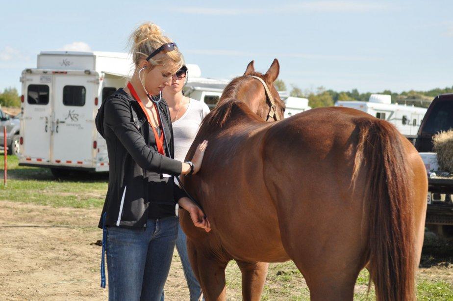 Les chevaux sont examinés par un vétérinaire avant d'avoir le feu vert pour participer au rodéo. | 20 septembre 2012