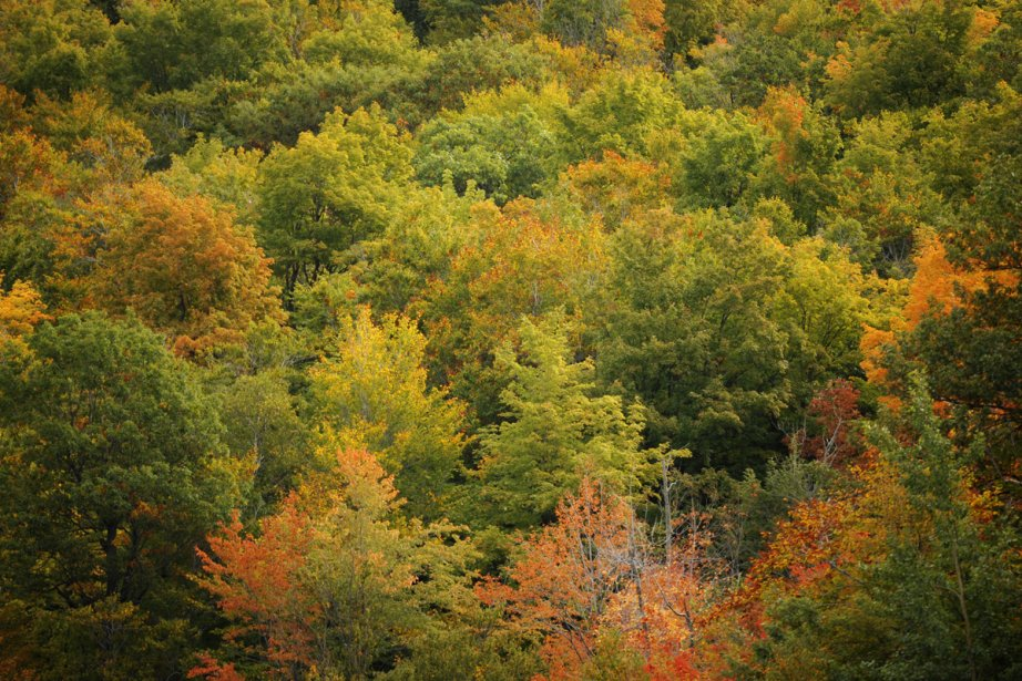 Couleurs d'automne au Québec... (Photo: Bernard Brault, La Presse)