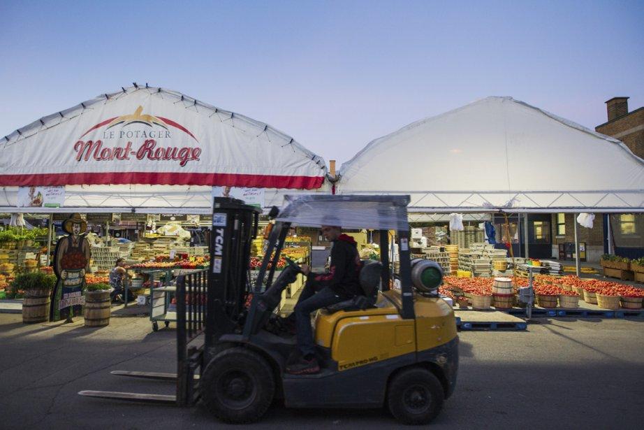 Potager Mont-Rouge au marché Jean-Talon.... (Photo: Édouard Plante-Fréchette, La Presse)